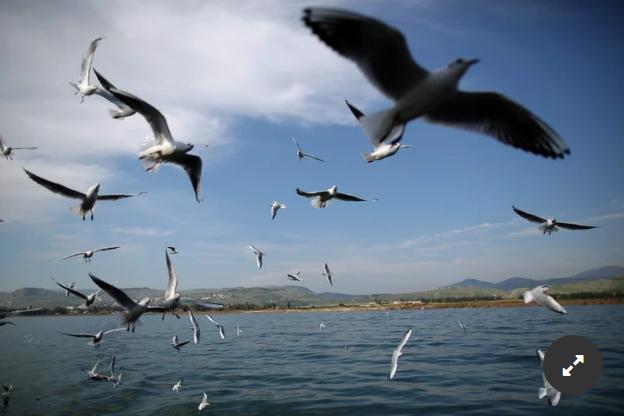 El vuelo de las gaviotas sobre el mar: el autor las eligió como metáfora de la sociedad y de una época.