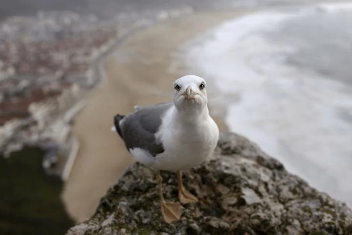 """Juan Salvador es la gaviota """"díscola"""", la que quería volar tan alto como un halcón."""