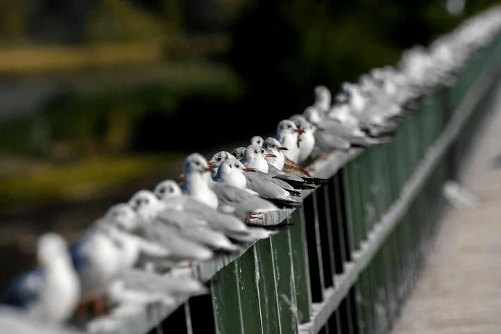 Un grupo de gaviotas alineadas. En la novela, una de ellas rompe con lo que se espera de ella. Foto EFE.